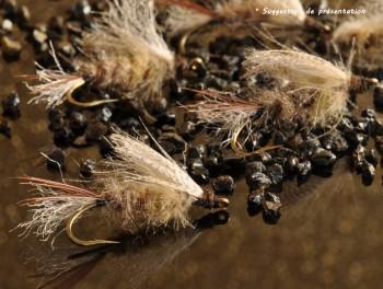 Emergente de mouche de mai