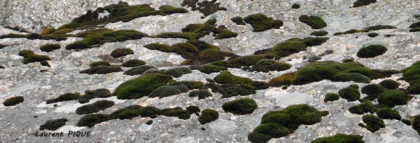 """Mouche peche """"De plumes et d'acier"""" Lichens"""