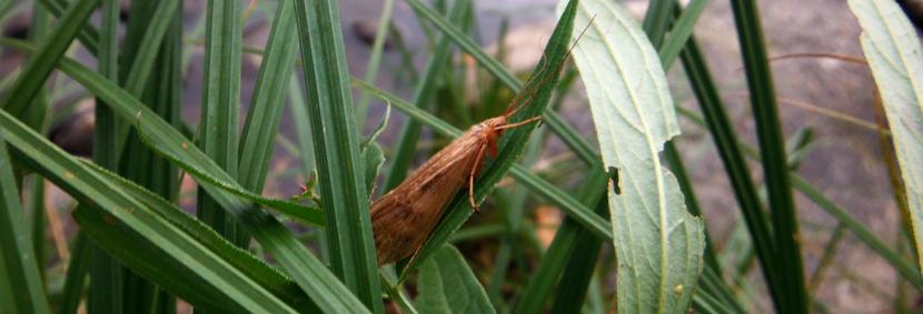 """Mouche peche """"De plumes et d'acier"""" Un des miliers de trichoptères cachés dans les herbes du bord de la Dordognes"""