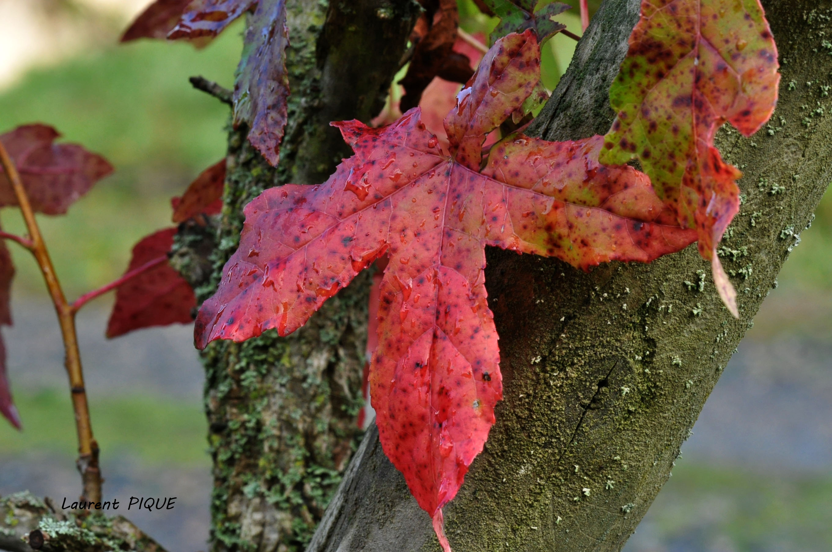 """Mouche peche """"De plumes et d'acier"""" L'automne"""