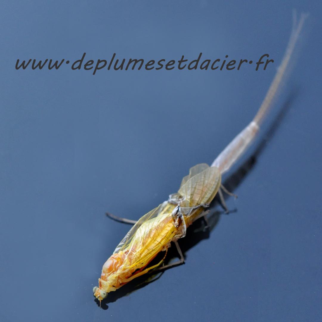 """Mouche pêche """"De plumes et d'acier"""" Potamanthus Luteus acte 8"""