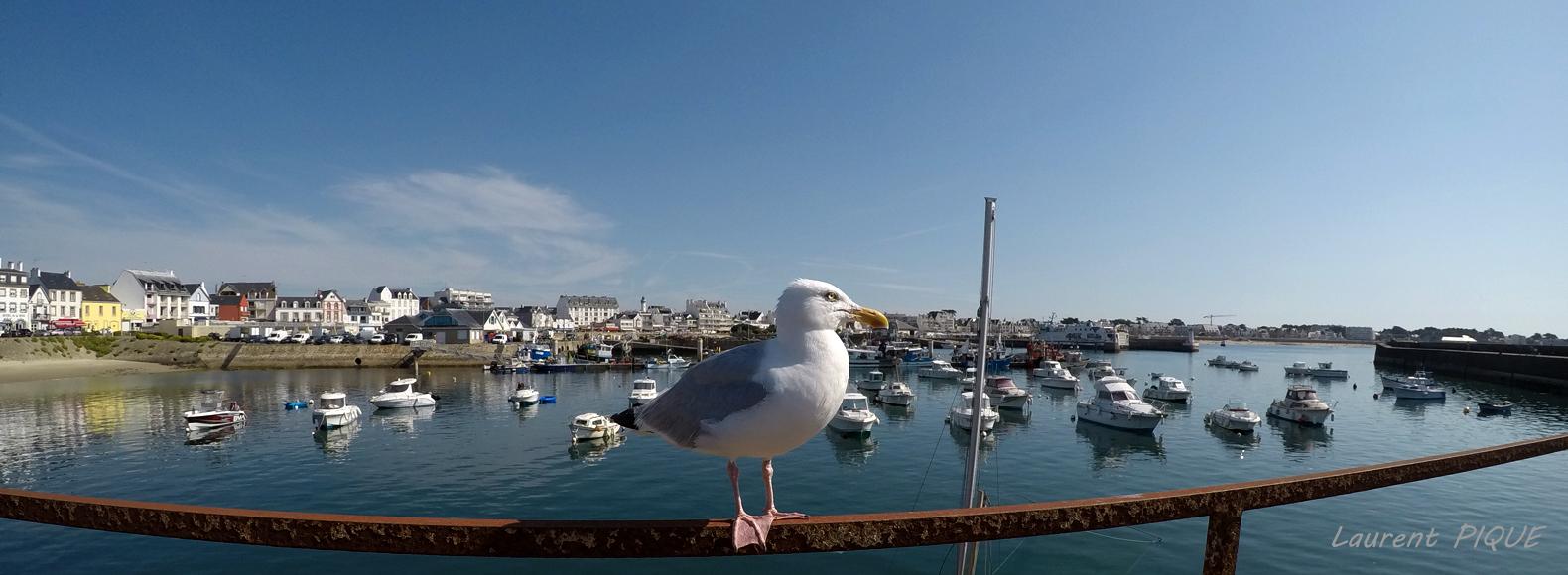 """Mouche pêche """"De plumes et d'acier"""" Quiberon1"""