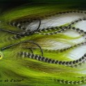 Mouche à Brochet Chartreuse
