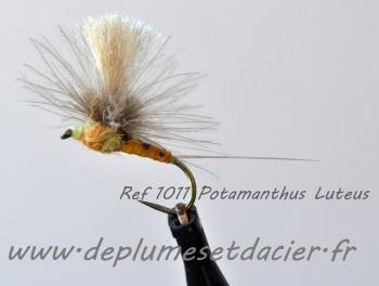 Mouche parachute Potamanthus Luteus