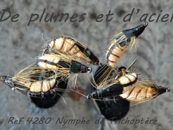 Nymphe de Trichoptère